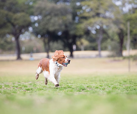 Waverley and Surry Hills puppy training